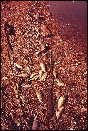 DEAD FISH ON THE SHORE NEAR PORT COVINGTON - N...