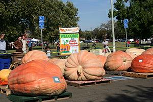 Giant Pumpkin Festival