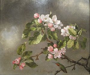 Heade Martin Johnson Hummingbird And Apple Blo...