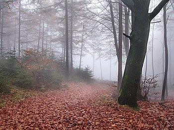 Fog in Teutoburg Forest near Oerlinghausen, Ge...