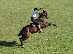 Doma de equinos  Wikipedia la enciclopedia libre