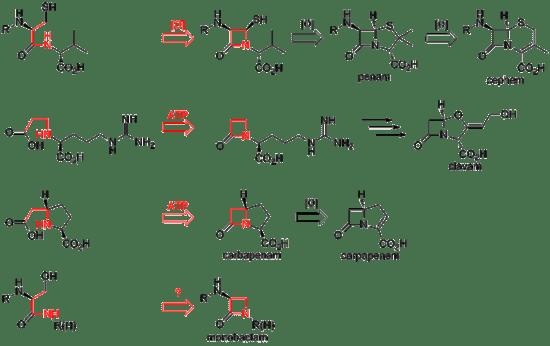 β-lactam antibiotic - Wikipedia