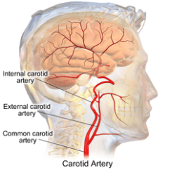 Human Skull Diagram Superior Friedland Door Bell Wiring Internal Carotid Artery - Wikipedia