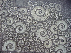 Coade stone ammonites