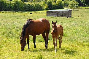 English: Mare and foal This fine pair were gra...