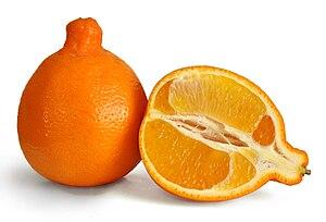 Deutsch: Die Minneola ist eine Zitrusfrucht mi...