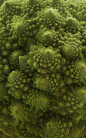 Romanesco broccoli or fractal broccoli is an e...