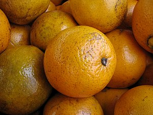 A Florida navel orange.