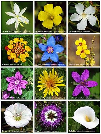 Contoh Bunga Hermafrodit : contoh, bunga, hermafrodit, Bunga, Wikipedia, Bahasa, Indonesia,, Ensiklopedia, Bebas