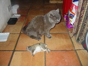 Gretel with rabbit