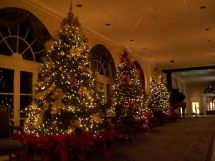 St. Louis Christmas Tree