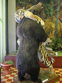 brown bear diagram hopkins 40955 wiring siberian tiger - wikipedia