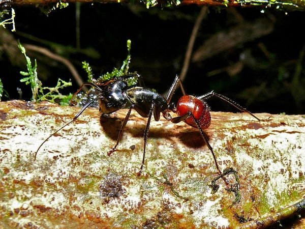 20 Rainforest Ants Pictures And Ideas On Stem Education Caucus