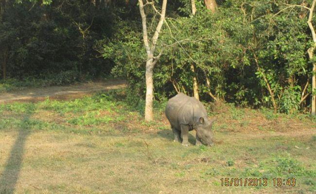 File One Horned Rhino Jpg Wikimedia Commons