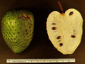 English: Picture of soursop fruit, Annona muri...