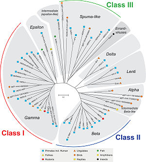 Dendrogram of various classes of endogenous re...