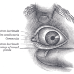 Structure Of Human Eye With Diagram Hayward Super Pump 1 Hp Wiring Wikipedia The Outer Parts