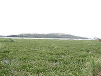 Water hyacinth-choked lakeshore at Ndere Islan...