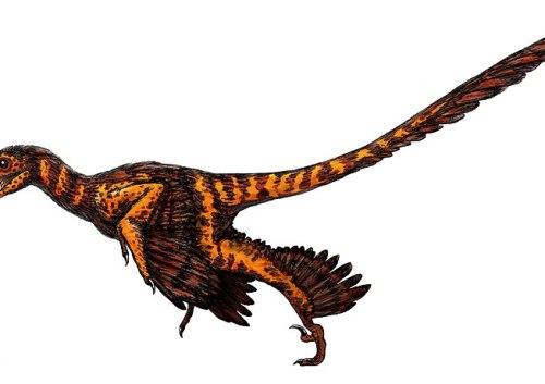 File:Sinornithosaurus.jpg