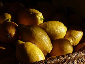 Mature spanish lemons (Citrus x limon)