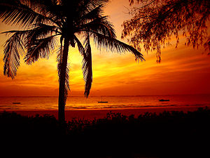 Red sunrise over palmtree and ocean