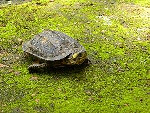 Tortoise 04