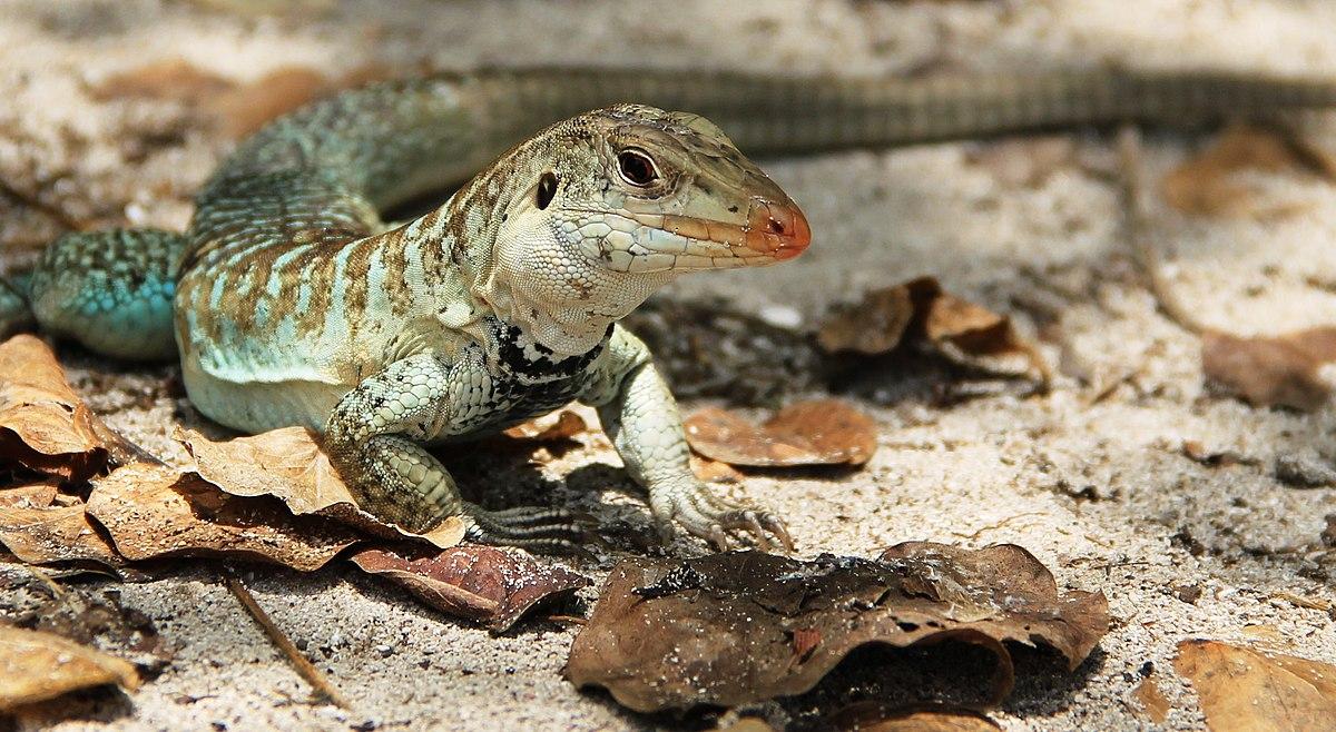 Reptiles Paisajes Con Celular Para