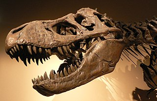 Fossil Trademark Patent Defense