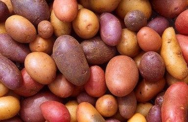 File:Patates.jpg