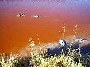 Aguas de la Laguna Colorada Potosí Bolivia