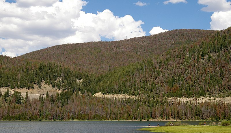 A forest displaying beetle effects in Colorado