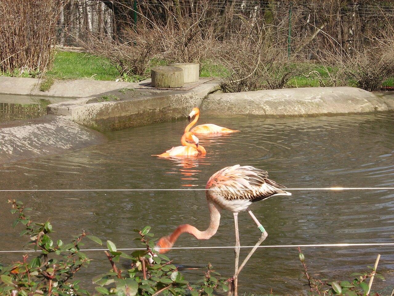 File Ostrava Zoo Plame Aci2