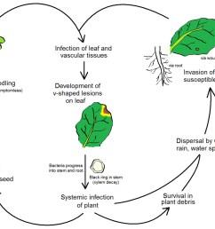 diagram of infection [ 1200 x 964 Pixel ]