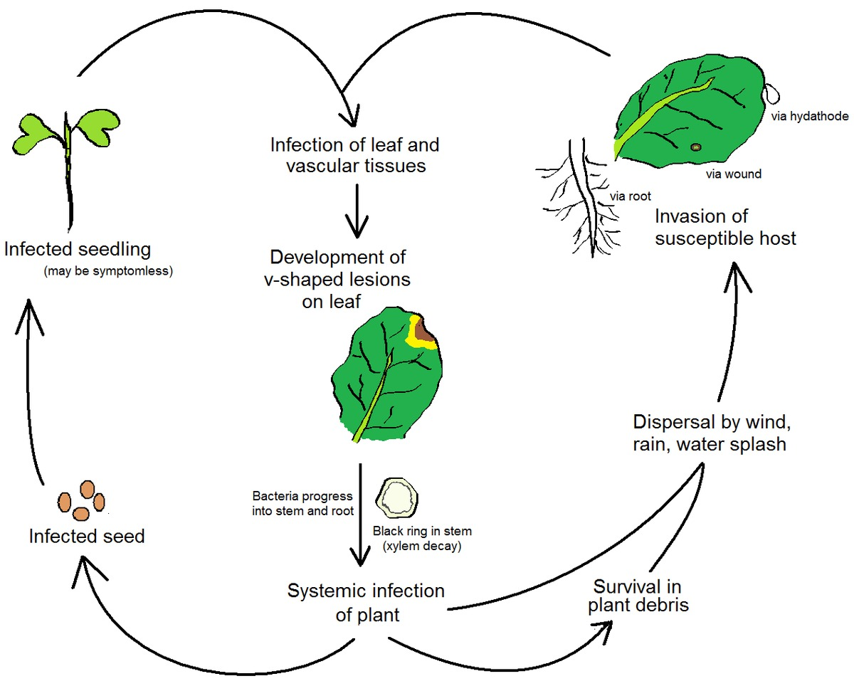 hight resolution of diagram of infection