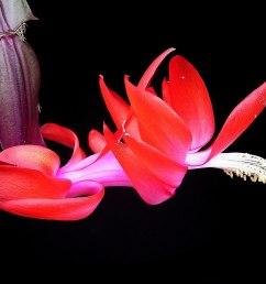 flower pollination diagram [ 1200 x 900 Pixel ]