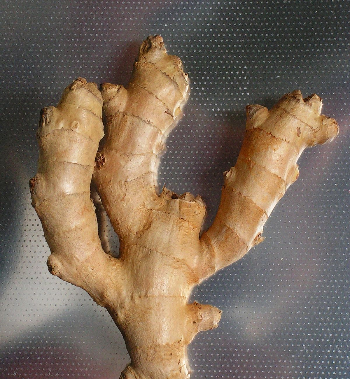 ginger root - Wiktionary