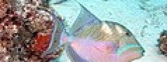4987 aquaimages.jpg