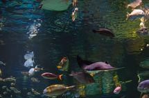 Aquarium at Silverton Hotel Las Vegas