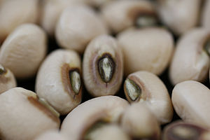 English: Close up of the black-eyed pea Catego...