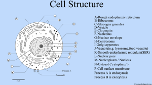 File:Cell Structure , Cell Diagrampng  Wikimedia Commons