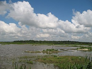 View looking west over the 'scrape' at RSPB Mi...