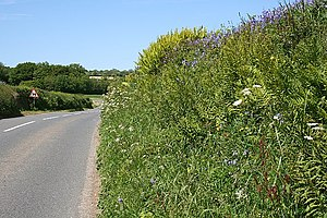 English: Roadside Bank. The hedgerows in this ...