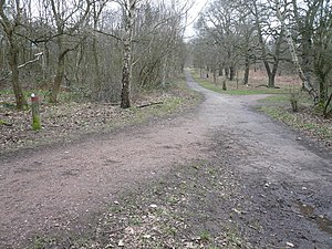 English: Sherwood Forest - Woodland Footpaths ...