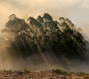 English: Back-scattering crepuscular rays. The...