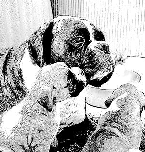 Deutsch: Zeichnung Boxerhund mit Welpen von El...
