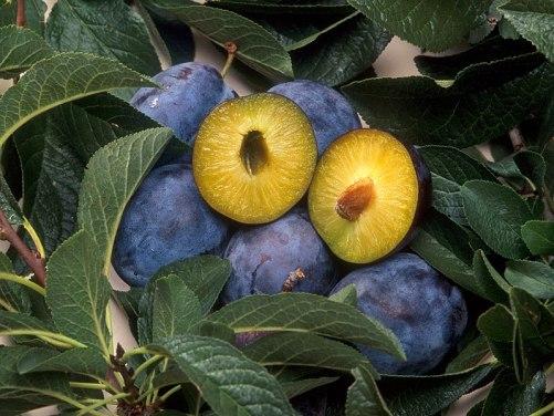 Tìm hiểu về thực phẩm biến đổi gen