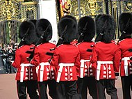 Lines of men wearing large black bearskin hats and red tunics.