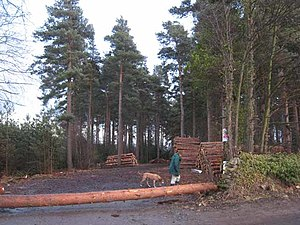 English: Dukeshouse Wood, Hexham A favourite a...