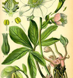 flower throat diagram [ 1200 x 1886 Pixel ]