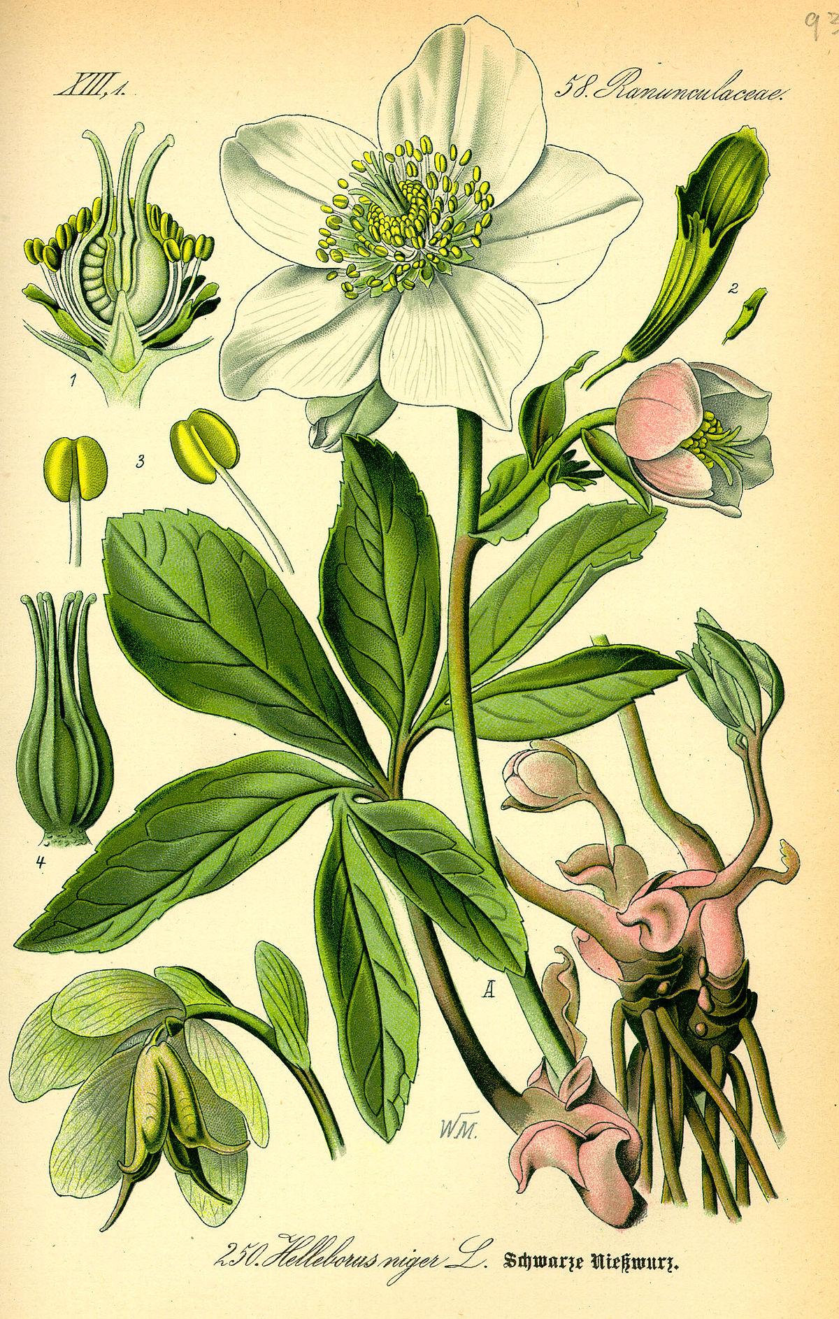 hight resolution of flower throat diagram
